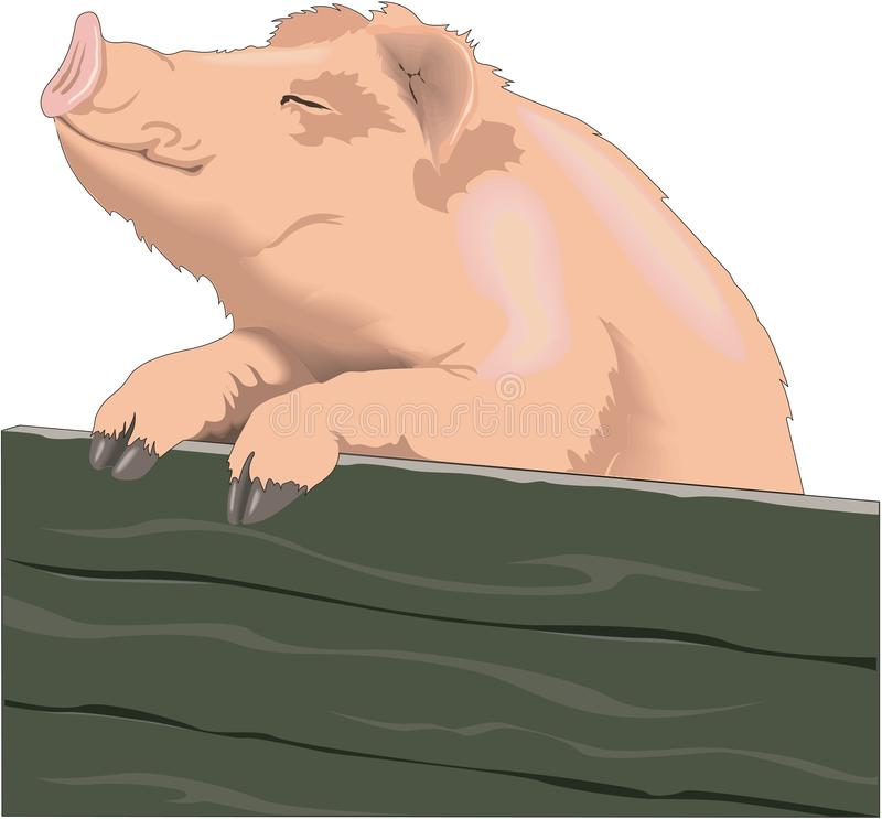 Schwein, das gegen einen Zaun Illustration steht stock abbildung