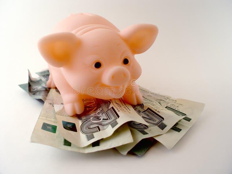 Schwein mit Geld stockfoto
