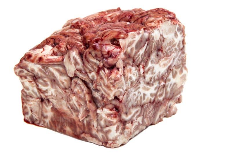 Schweinefleischgehirn stockbilder