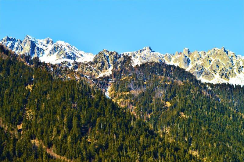 Schweizer Alpen im Frühjahr stockbild