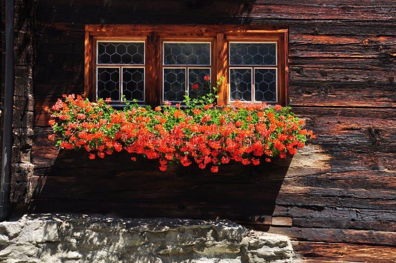 Schweizer Klotzchaletfenster mit roter Pelargonie blüht lizenzfreie stockbilder