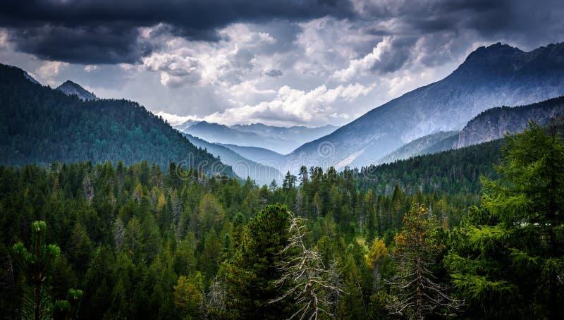 Schweizer Wald stockfotos