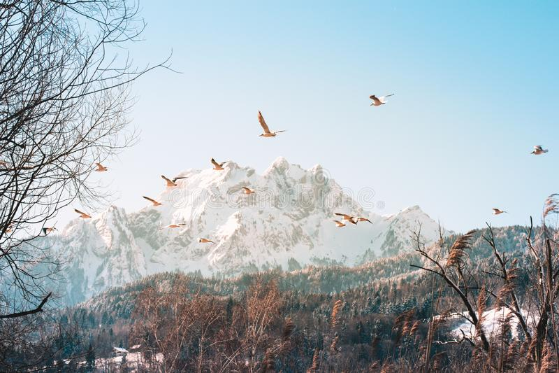 Schweizisk fjällängbergäng - Schweiz royaltyfri bild
