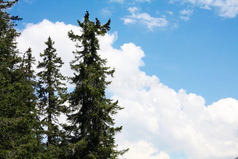 Schweizisk skog i bergfjällängar, sommar switzerland fotografering för bildbyråer