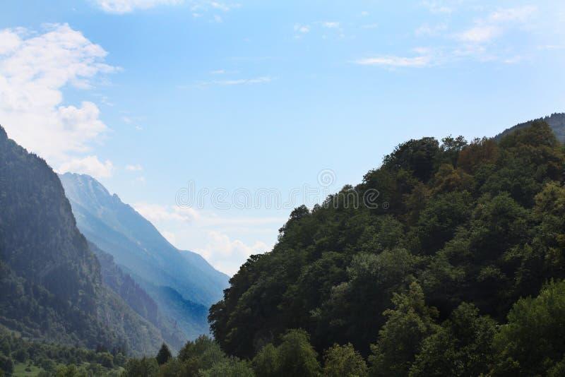Schweizisk skog i bergfjällängar, sommar switzerland arkivbild