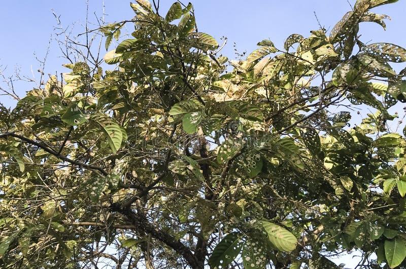 Schwer geplagter Baum stockfoto