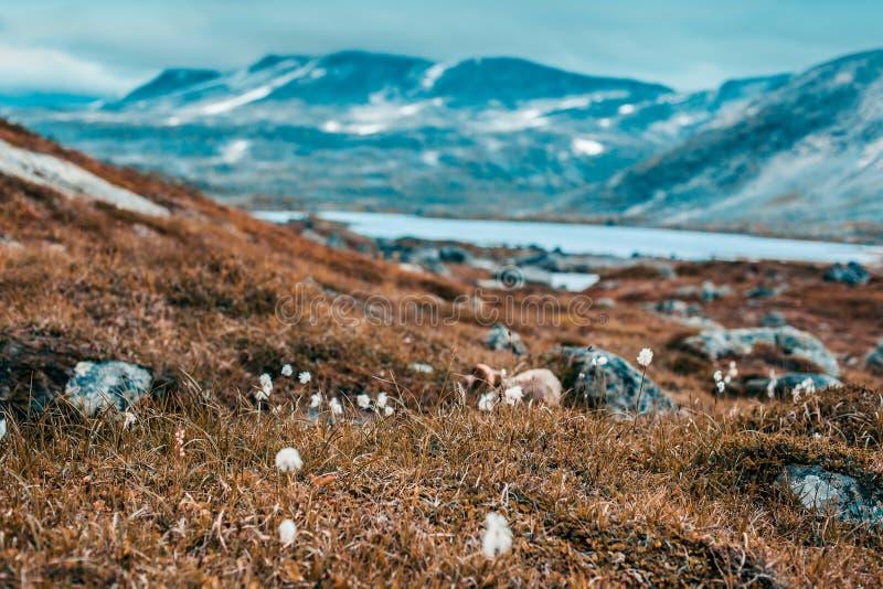 Schwere Landschaft Norwegens und kleine Blumen stockfotos