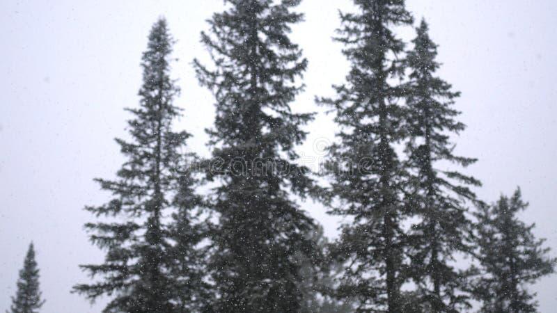 Schwere Schneefälle im Winter im Kiefernwinterwaldfabelhaften Winterwald und im Himmelhintergrund lizenzfreie stockfotos