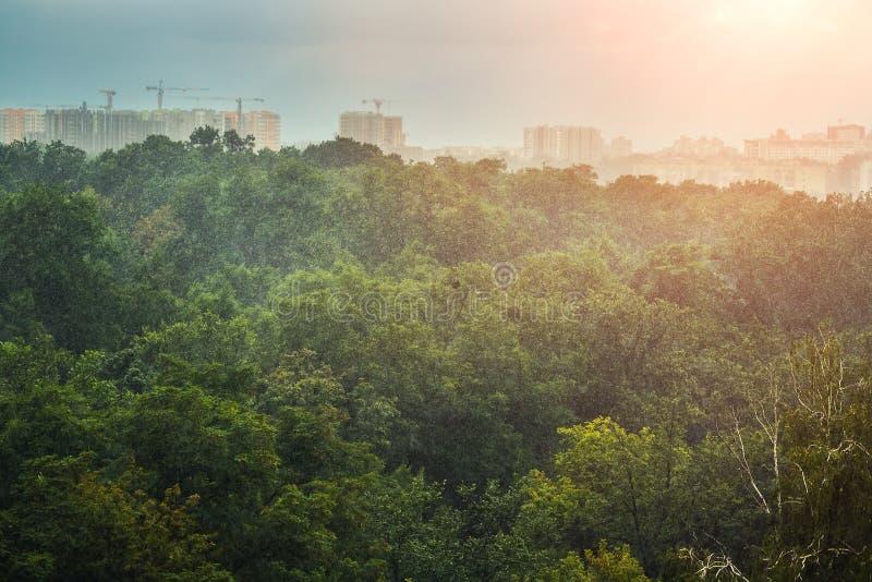 Schwerer auslaufender Sommerregen über grünen Wald- oder Stadtparkbäumen Regensturmregengusswetter Sun, der nach Sturmende schein lizenzfreie stockfotografie