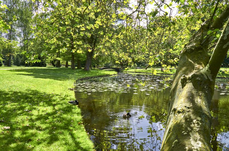 Schwerin Palace Garden on a sunny day, Schwerin, Germany. Flower, background, floral, tree, water, summer, horse, leaf, spring, park, beautiful, europe, forest royalty free stock images