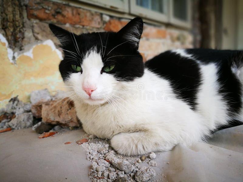 Schwermütige Katze stockfotos