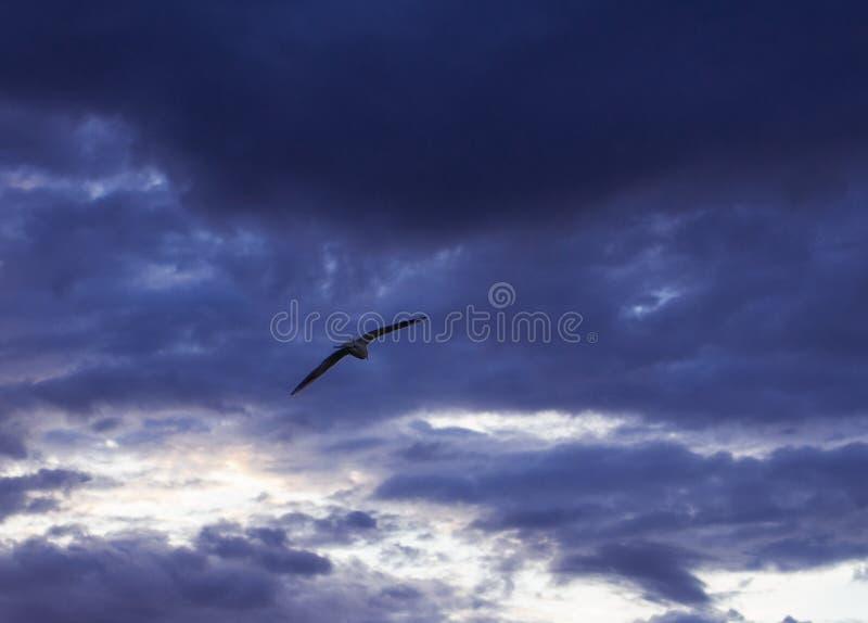 Schwermütiger, bewölkter Himmel mit einem Seemöwenfliegen stockfotos