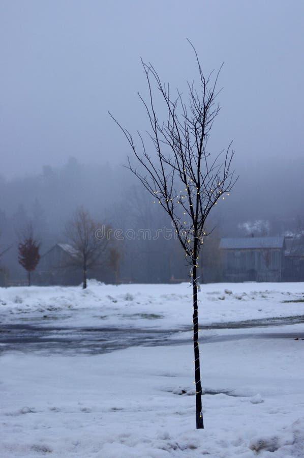Schwermütiger kleiner Baum mit Lichtern im Nebel lizenzfreies stockbild