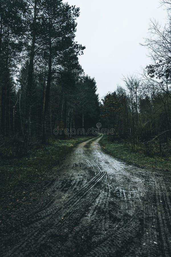 Schwermütiger Wald stockbild