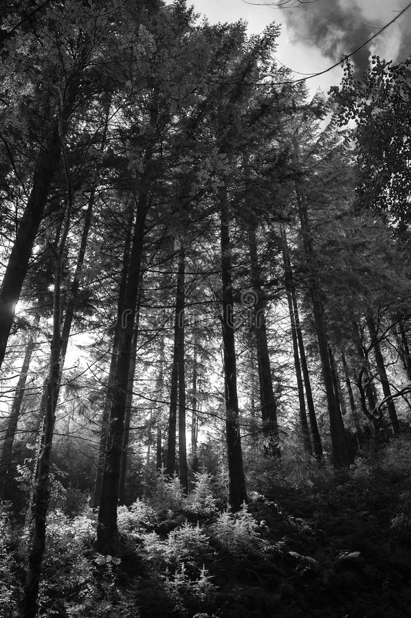 Schwermütiger Wald lizenzfreie stockfotografie