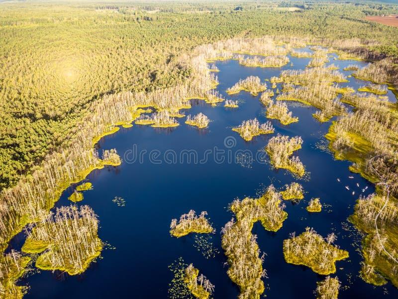 Schwermütiges Brummen-Foto des bunten Heidemoors im Frühsommer-Sonnenaufgang lizenzfreie stockbilder