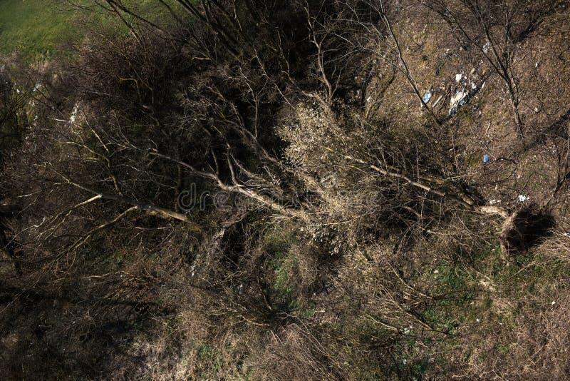 Schwerm?tiges Brummen-Foto des bunten Heidemoors im Fr?hsommer-Sonnenaufgang lizenzfreies stockfoto