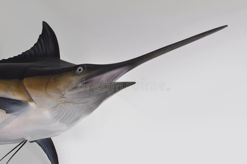 schwertfische stockbilder