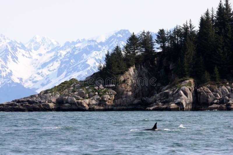 Schwertwal und Berge, III stockbild