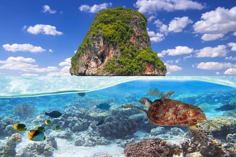 Schwimmen der grünen Schildkröte Unterwasser stockfoto
