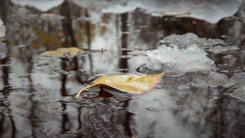 Schwimmen des Blattes im Herbstpfützenwasser lizenzfreie stockbilder
