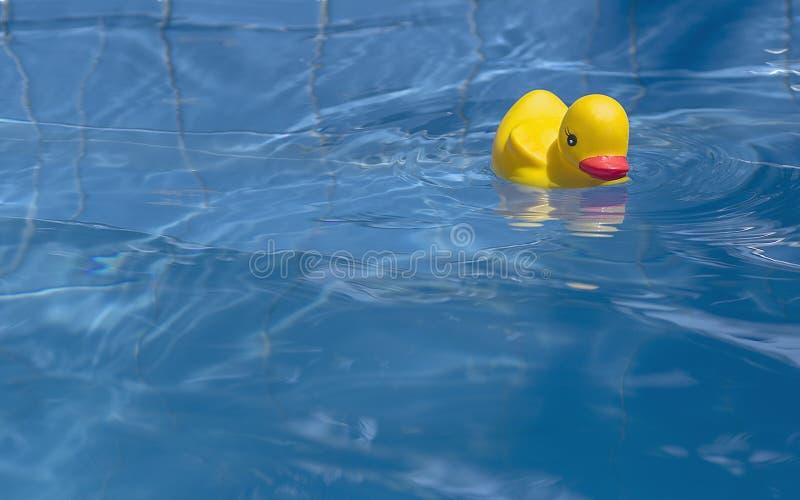 Schwimmen im Pool lizenzfreies stockbild