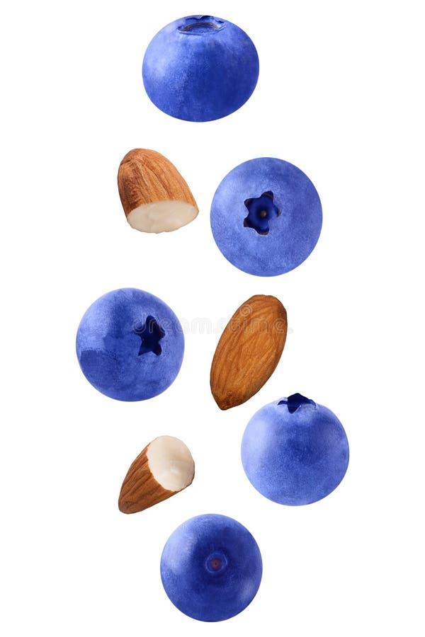 Schwimmen lokalisiert auf weißen Hintergrundblaubeerfrüchten und -mandeln lizenzfreie stockfotografie