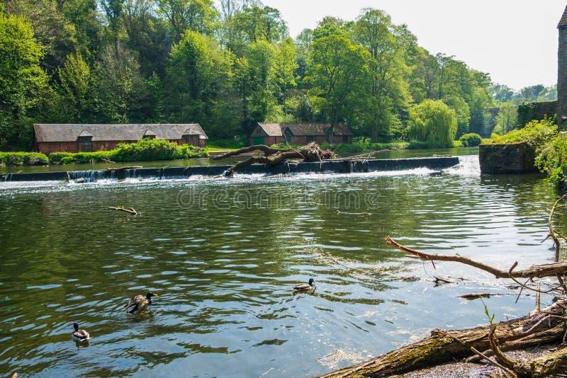 Schwimmende Enten in der Fluss-Abnutzung und traditionelle Gebäude in Durham, Großbritannien lizenzfreie stockfotografie