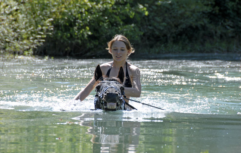 Schwimmenpferd stockfoto