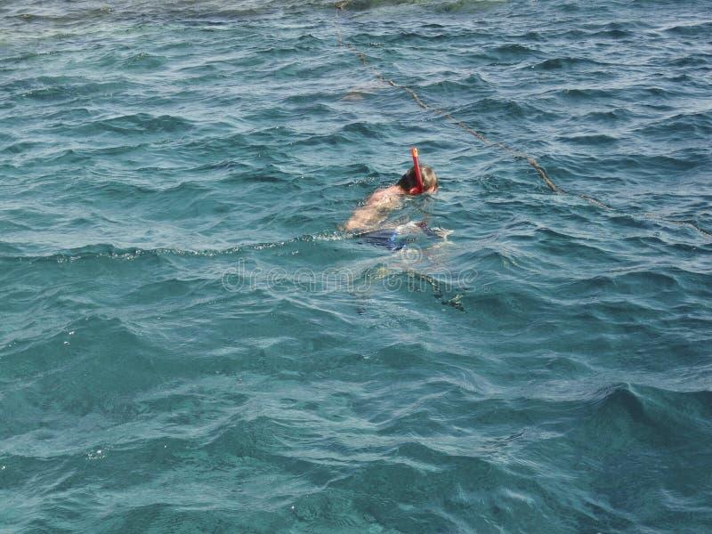 Schwimmer mit einer Maske und einer Schnorchel, die teilnehmen, an dem Snrkelling im roten meeres-, überprüft die Unterwasserwelt stockfotografie
