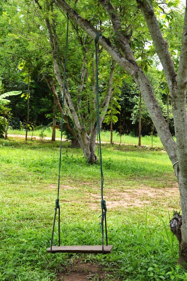 Schwingen auf Baum lizenzfreie stockfotos