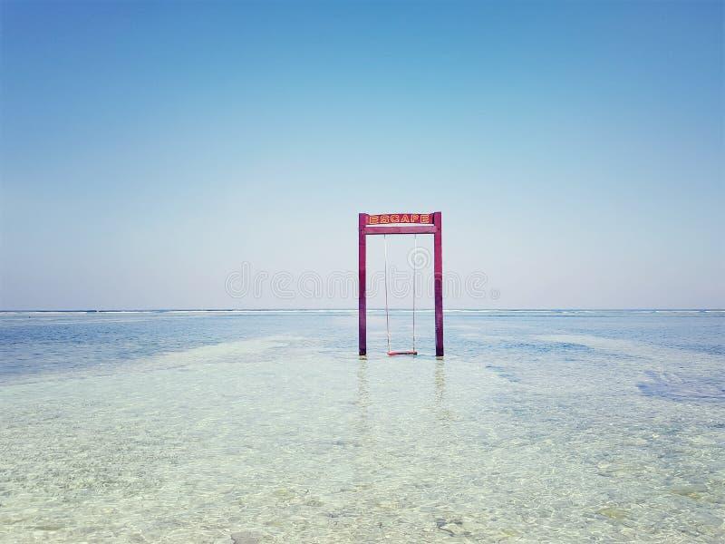 Schwingen im Meer stockfoto