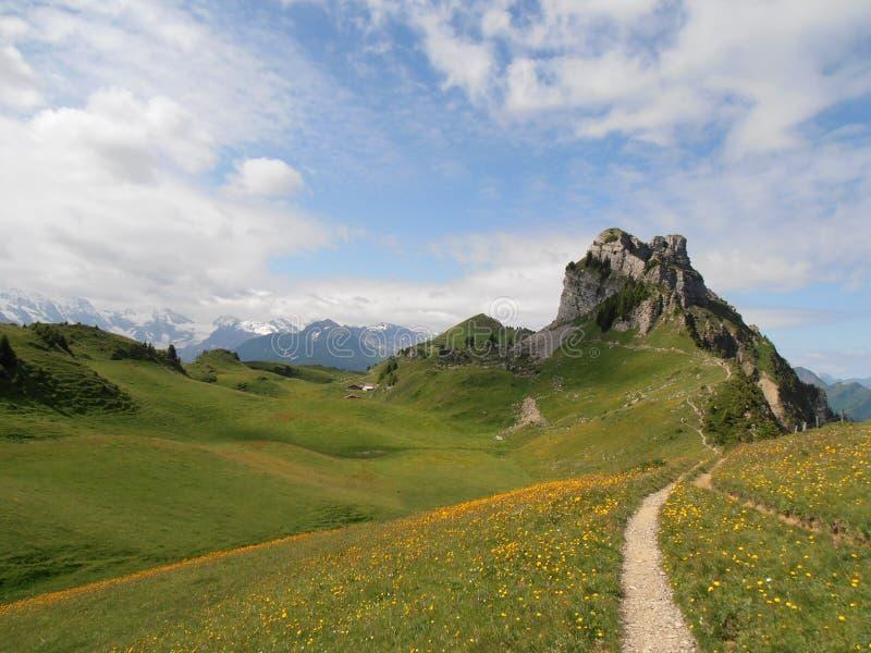 Schynige Platte Szwajcaria obrazy royalty free