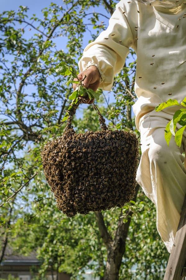 Sciame dell'ape e dell'apicoltore immagini stock