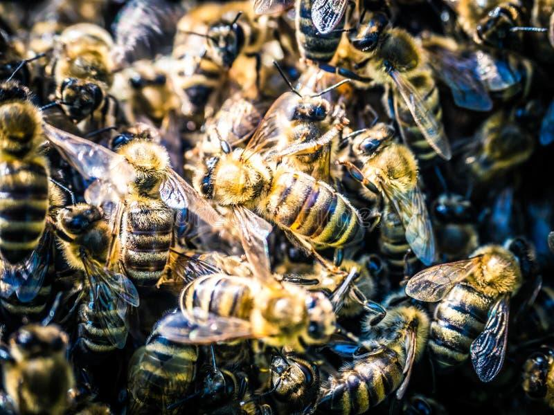 Sciame delle api ad estate fotografia stock