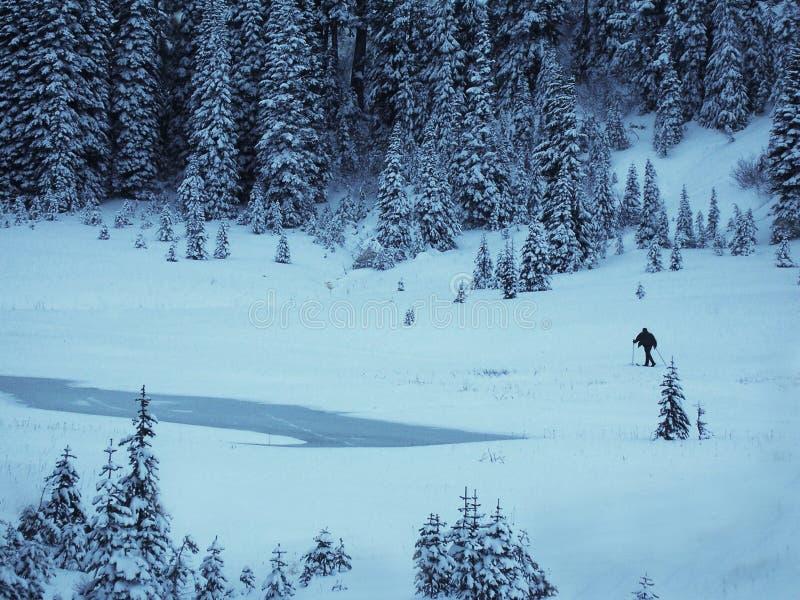 Sciatore del paese trasversale dal grande tipsoo, Mt Rainier National Park fotografia stock libera da diritti