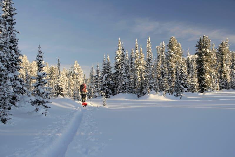 Sciatore turistico sulla pattino-pista immagine stock libera da diritti