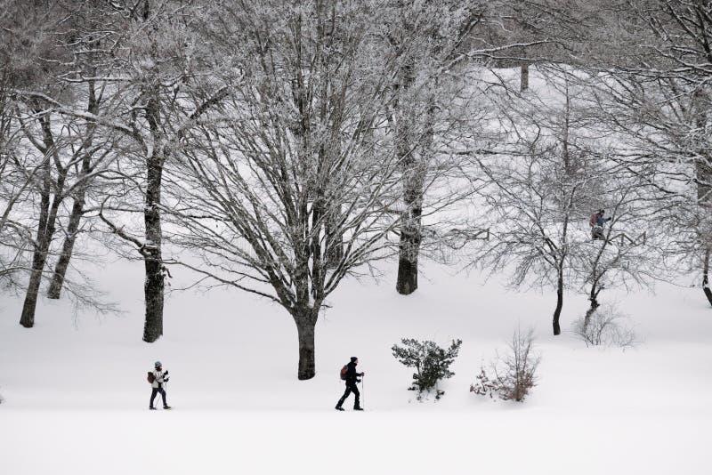 Sciatori che attraversano il pæse nel paesaggio di inverno fotografia stock libera da diritti
