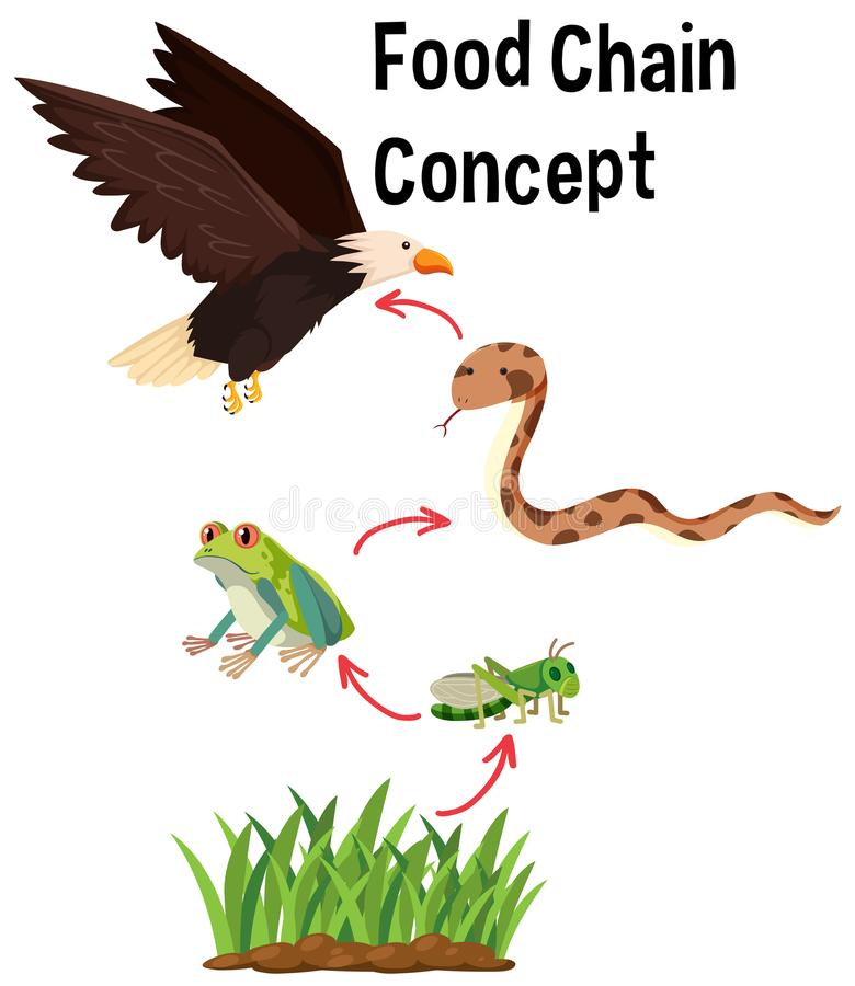 Science Food Chain Concept royalty free illustration
