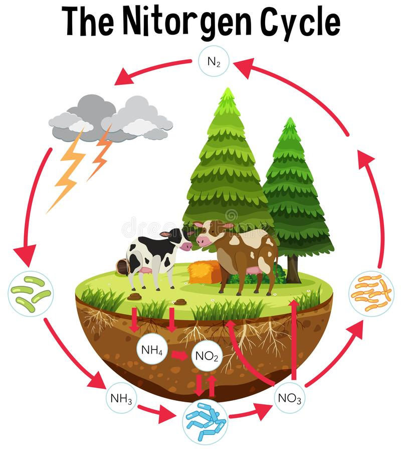 A Science Poster of Nitrogen Cycle stock illustration