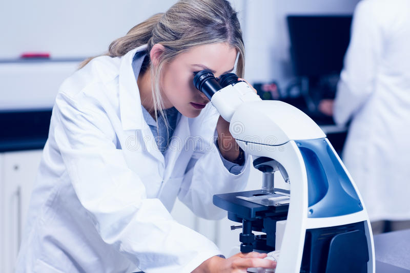 Science student looking through microscope in the lab royalty free stock images