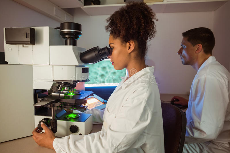 Science students working in the laboratory one looking through microscope. At the university stock photos