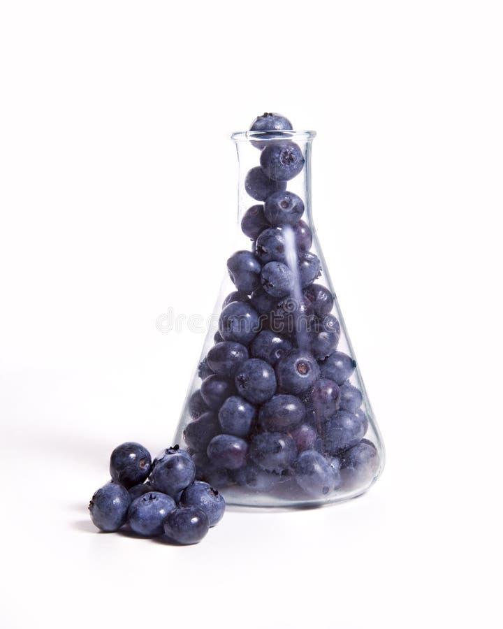Scientific Blueberries stock photo