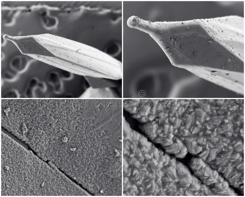 Scientific collage. Photo from electron microscope stock photography