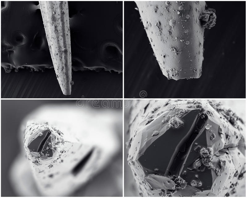 Scientific collage. Photo from electron microscope stock photos