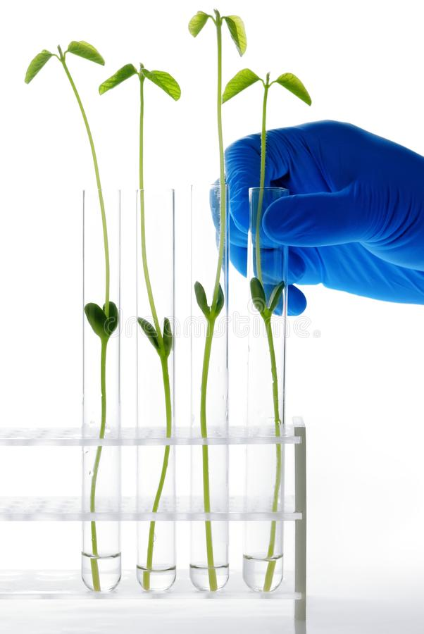 Download Scientific Experiment With Grow Plants Stock Photography - Image: 17789572
