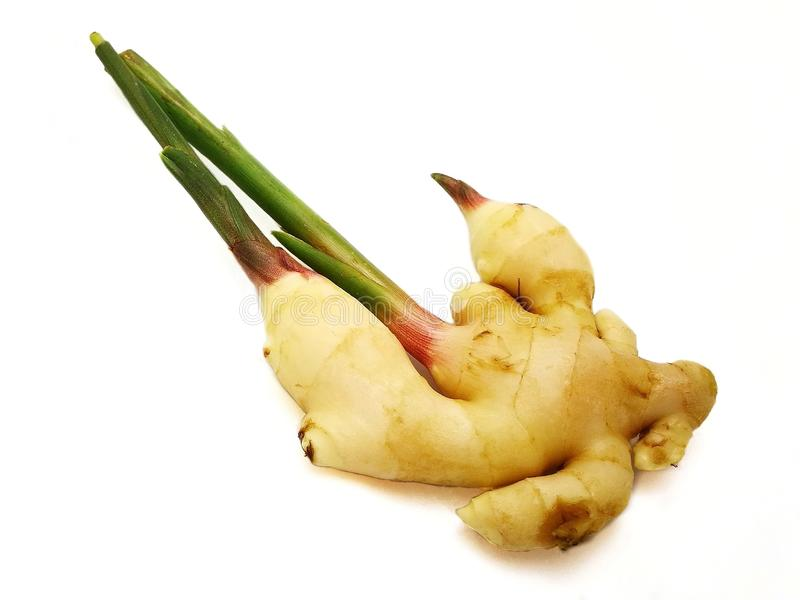 Fresh young ginger rhizome or root with stems and shoots on white background. royalty free stock photos