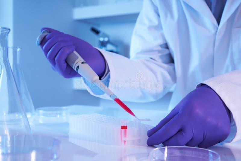 Scientifique à l'aide de la pipette dans le laboratoire photo stock
