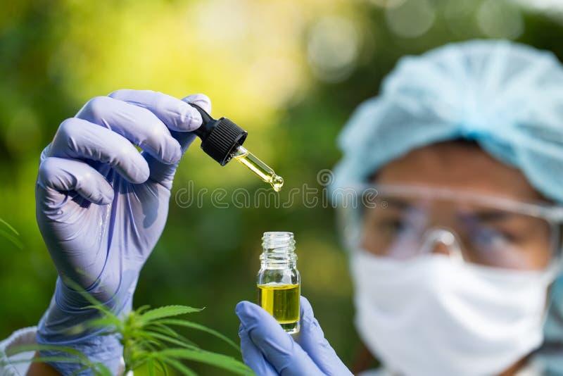 Scientifique Analyser et faire des recherches sur les extraits d'huile de chanvre, Concept de médecine alternative à base de plan image stock