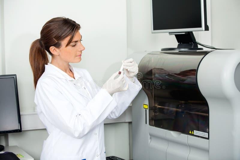 Scientifique Analyzing Blood Sample pour la coagulation photos libres de droits